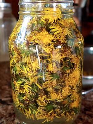 tinktura od maslačka recept