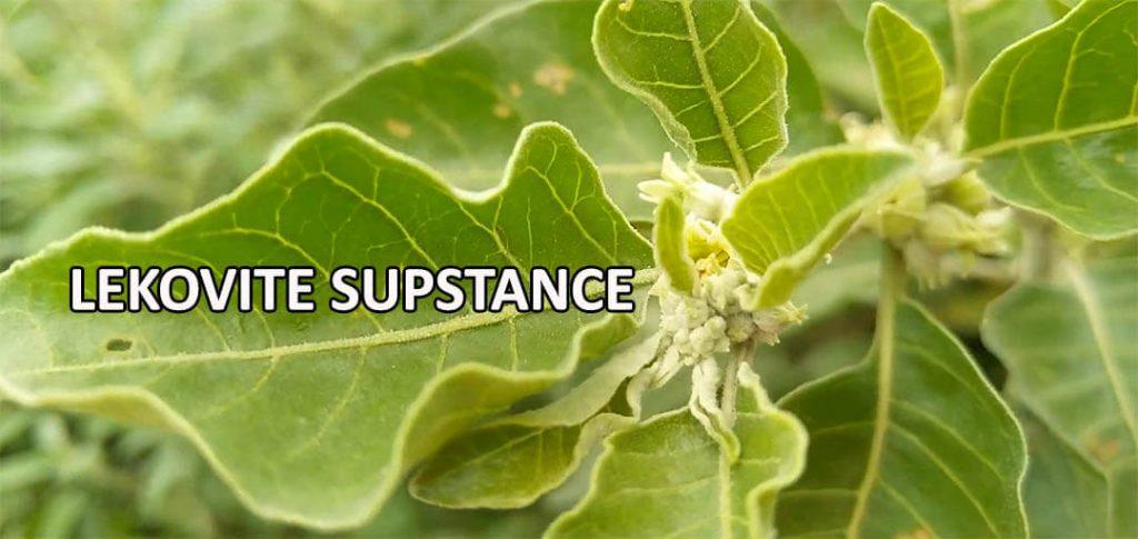 ashwagandha lekovita svojstva