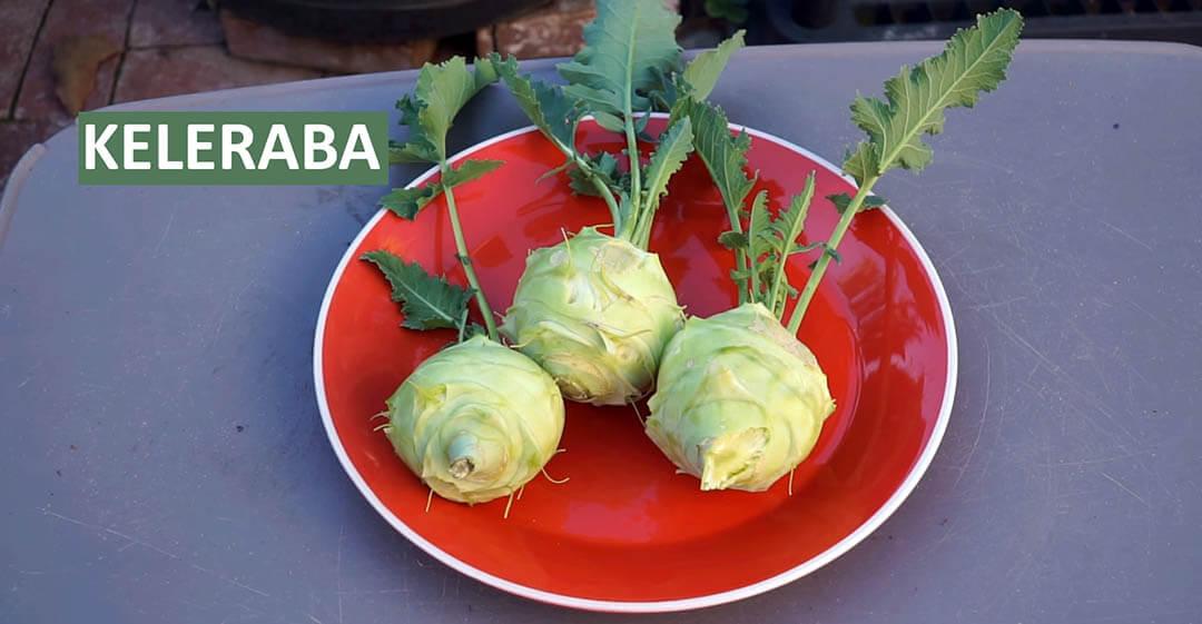 Keleraba slika povrća